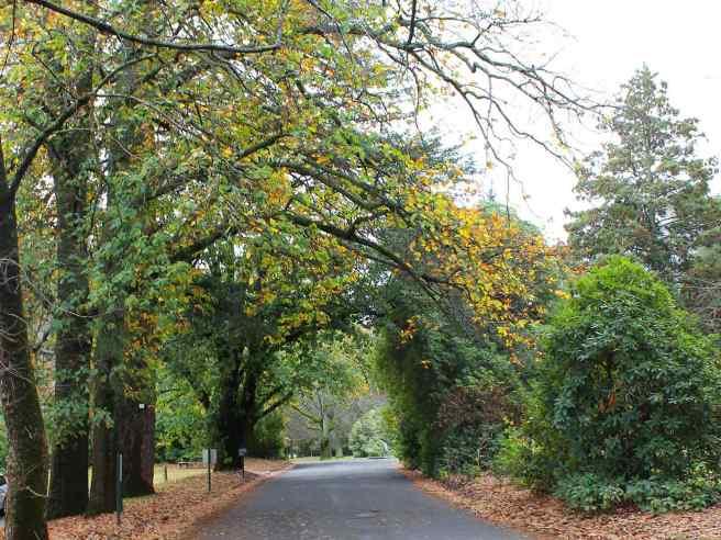 Beechworth Maydayl Hills gardens from explorebeechworth